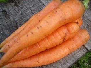 Zanahorias- Huerto ecologico- Hotelesenllanes.net
